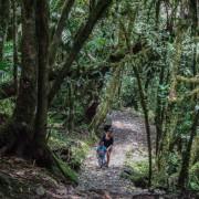 Turista por la selva