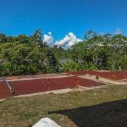 Cacao secando al sol