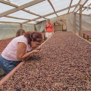 Turistas aprendiendo a hacer chocolate