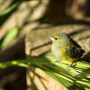 Foto de ave en Moyobamba