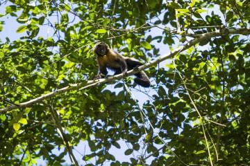 Foto de Mono Machin en Reserva Tingana
