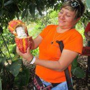 Guía turístico muestra fruta del cacao