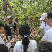 Guía turístico muestra sembríos de cacao en la Chacra Pasiquiwi