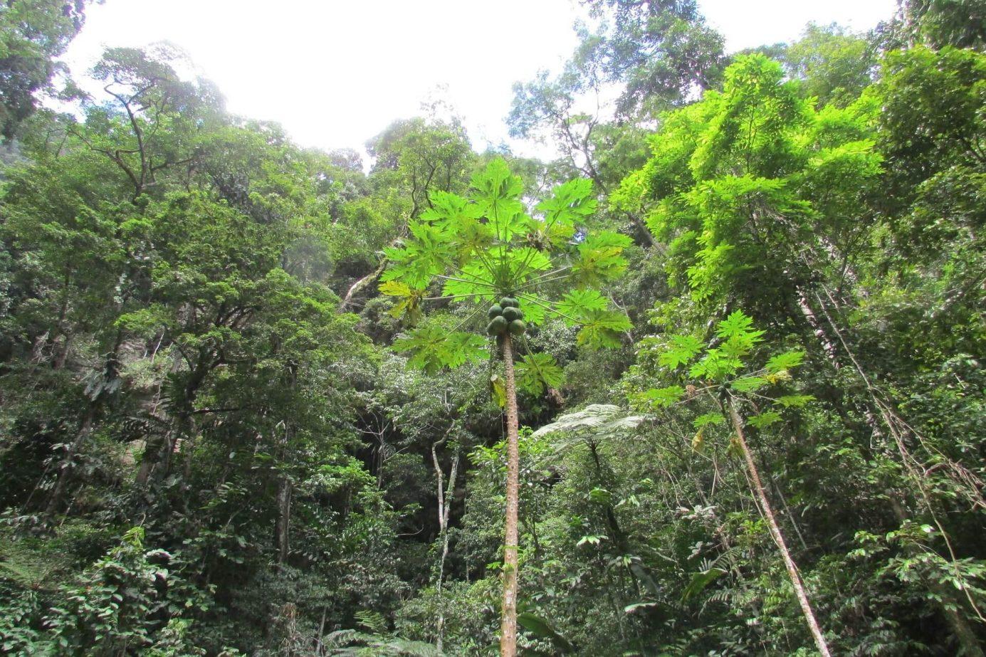 Selva de Tarapoto